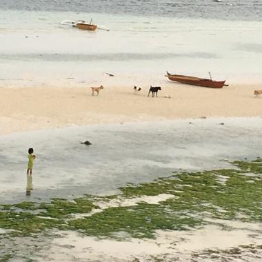 Psíky a riasy na pláži