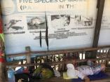 5 druhov korytnaciek a spiaci Enzo