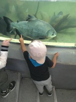Koukej BIG FISH