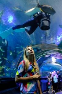 Aquaria - sklenený tunel