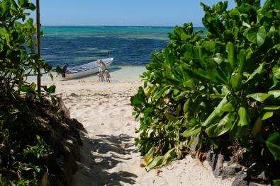 Cesta cez mangrovníky do Gold Coastu