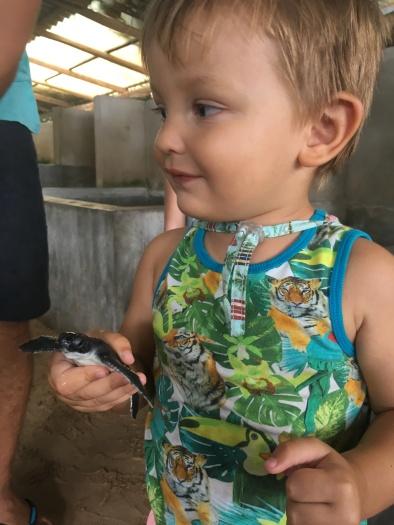 Túto malú korytnačku Enzo vypustí do mora