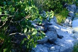 Punta Sur - krokodíly pod majákom
