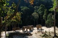 Prvé sloníky