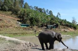Sloní kúpel