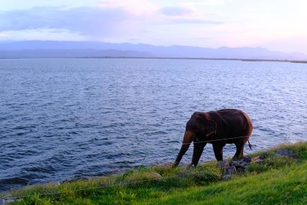 Prvý sloník, ktorému sa podarilo dostať za bránu parku