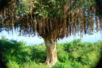 Tento strom nám pripomínal strom želaní (bolo to v Avatare?)