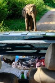 Sloník sa rozhodol, že touto cestou náš jeep neprejde