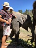 Kŕmenie slonov