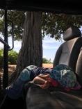 Enzo už mal dosť slonov, zaspal....