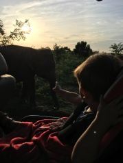 Enzo a sloník