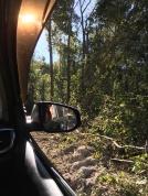 Jeep ku slonom