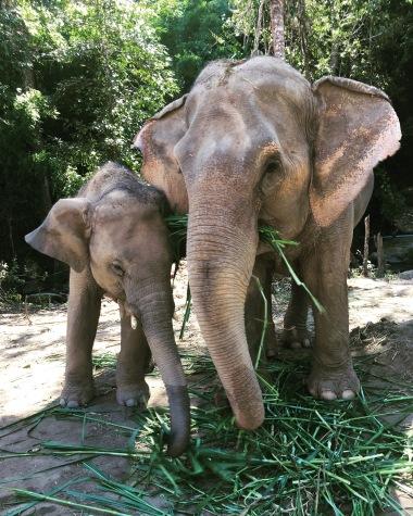 Sloníky