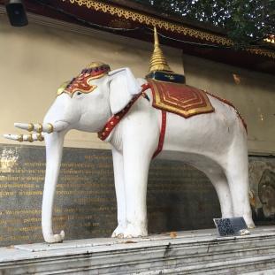 Biely slon v Doi Suthep